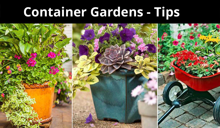 Container Gardens – Tips