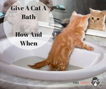 Give A Cat A Bath - How And When