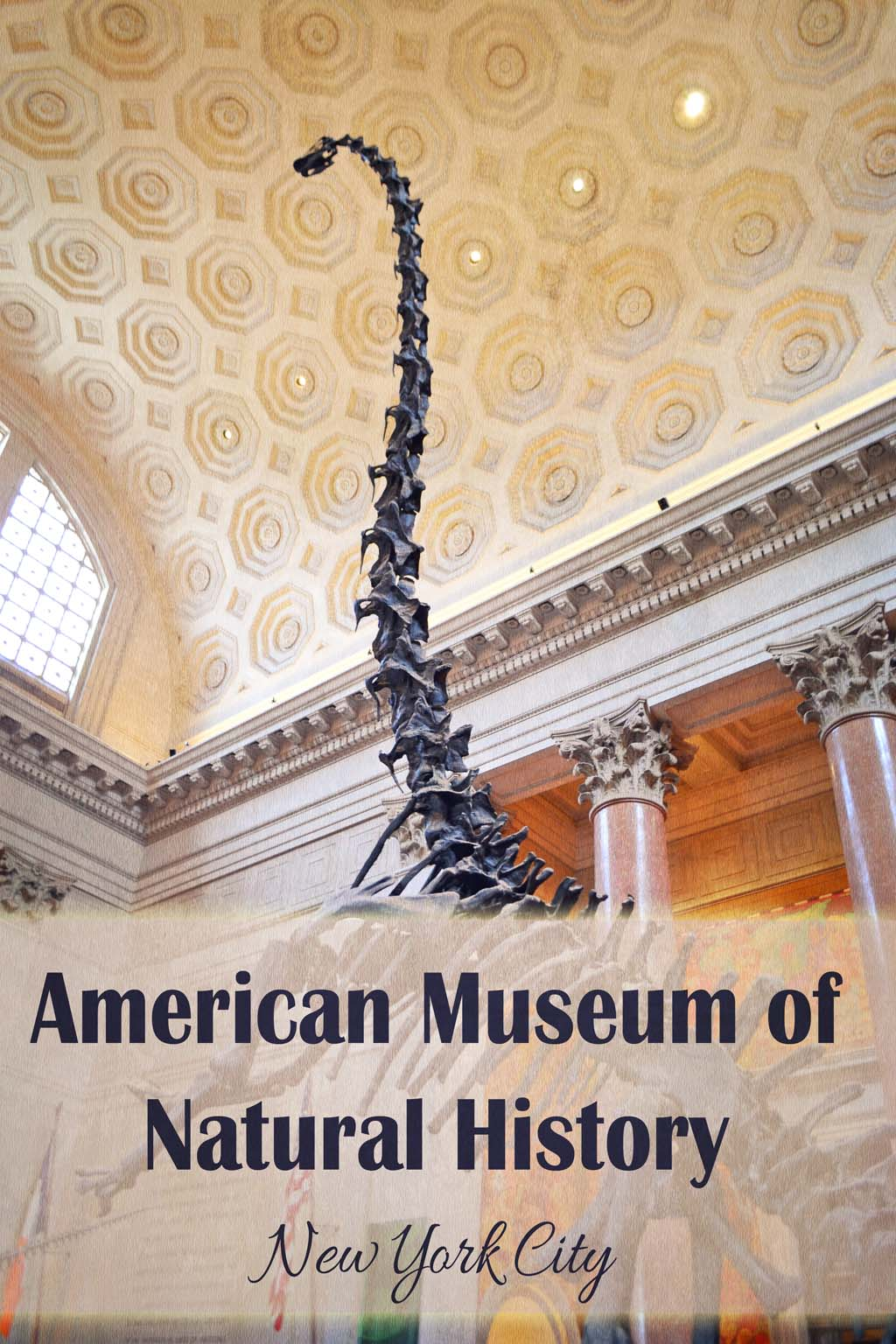 Tips For Visiting The American Museum Of Natural History