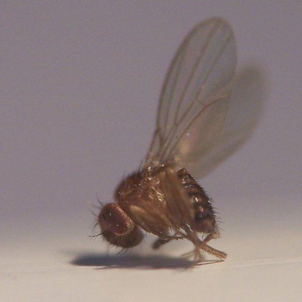 Отек после укуса насекомых. Как снять отек от укуса мошки и избежать неприятностей