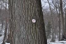 1777E Trail Marker