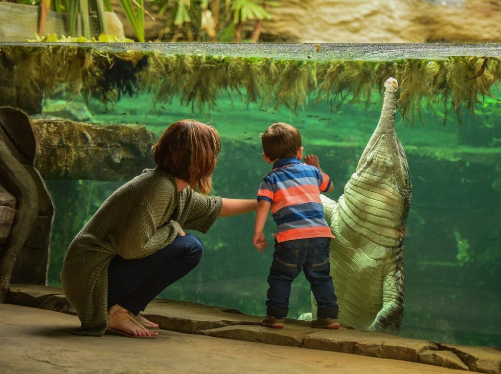 A woman and child admiring a crocodile at Chester Zoo.