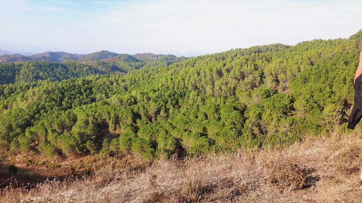 Laurels & Pines trail