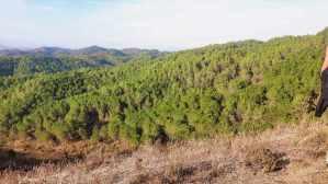 Laurels and Pines trail (Ndroq-Lalmi-Vaqarr) (5)