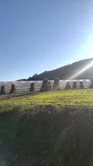 Arbane-Budine-Zhullime-Paper trail (23)