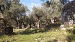 Arbanë-Petrelë-Krrabë-Shijon trail (6)