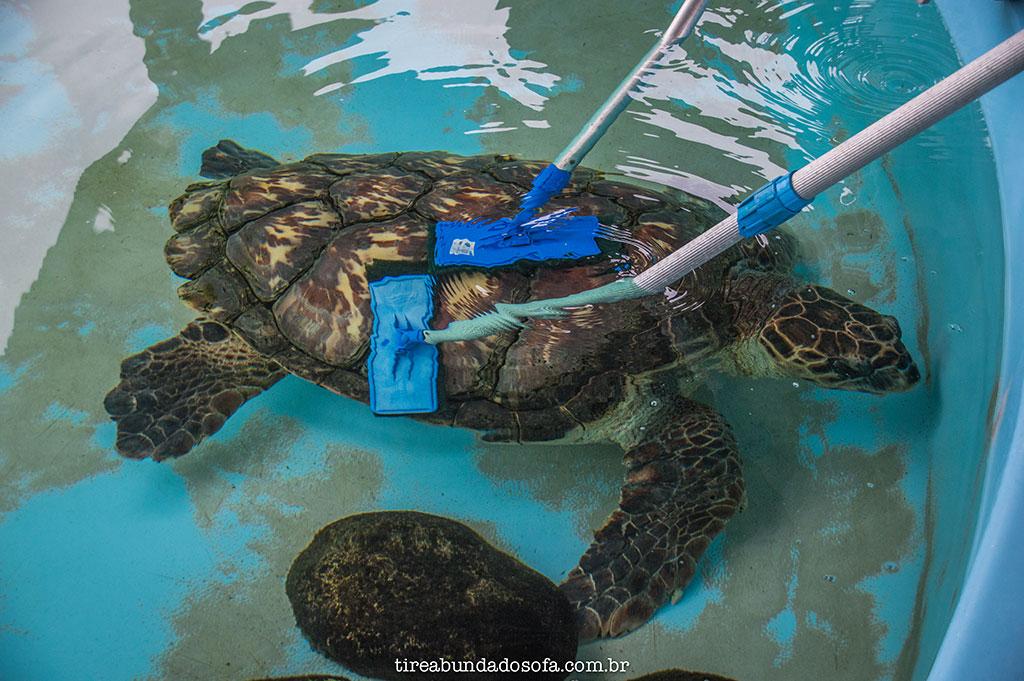 pessoas limpando o casco de uma tartaruga no projeto TAMAR de Floranópolis