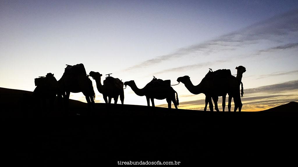 camelos no deserto do saara, em merzouga, marrocos