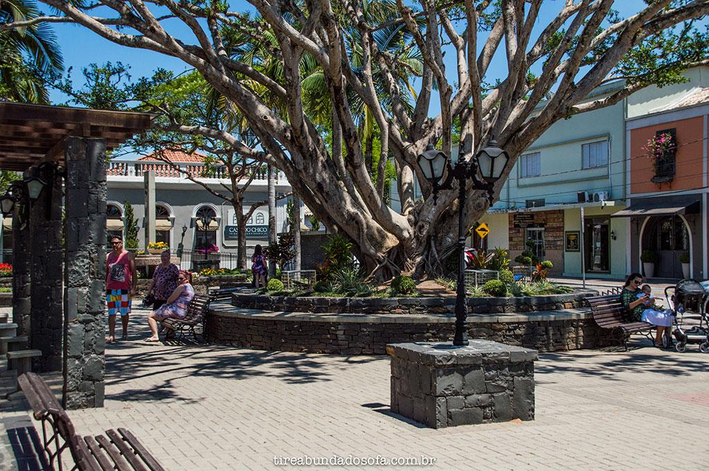 Árvore centenária na Praça Humberto Bortoluzzi