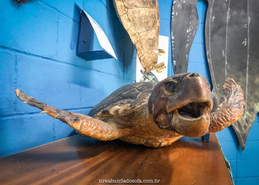 tartaruga exposta no museu do aquário de peruíbe, sp