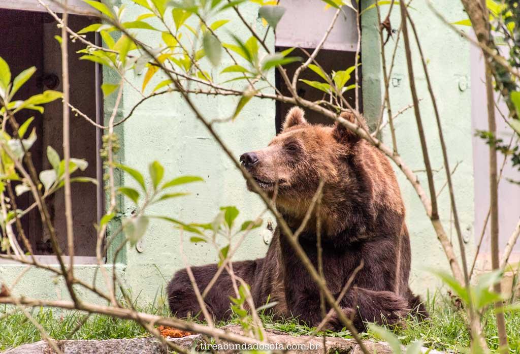 urso resgatado de circo, no zoo pomerode, em SC