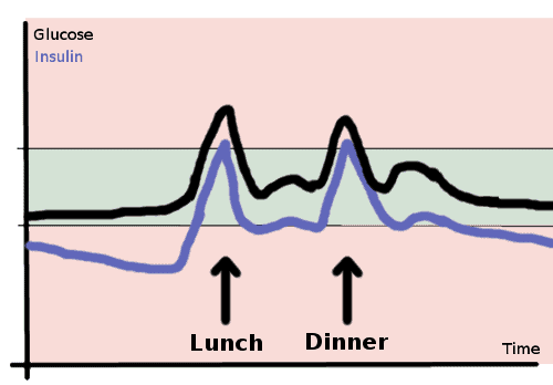 glucose and insulin with 2 meals a day - schema