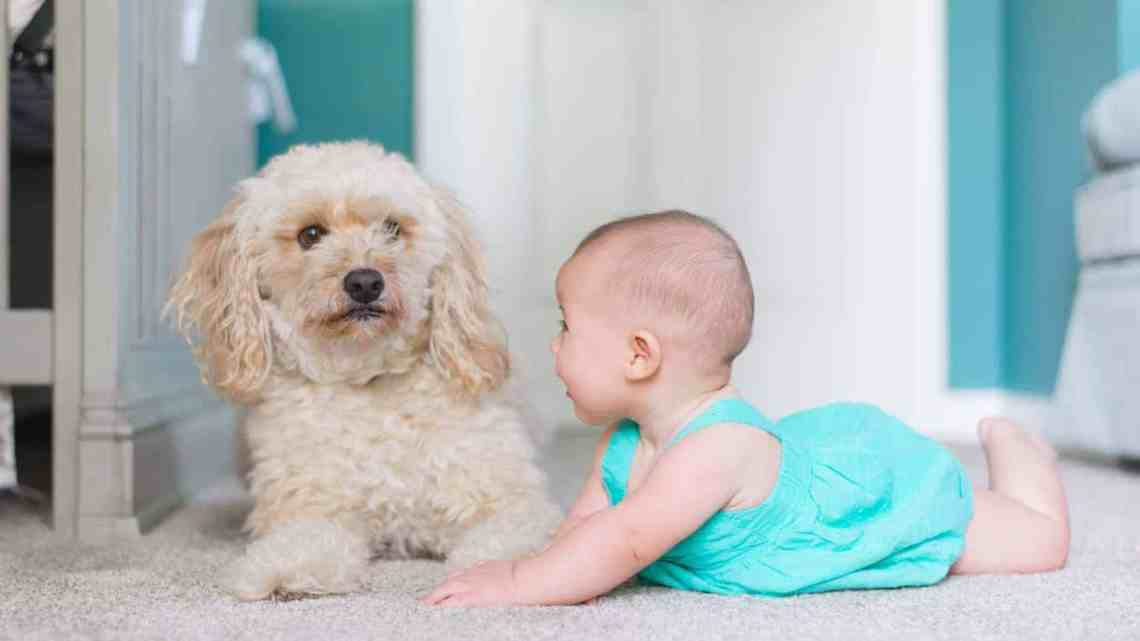 What Are The Health Benefits For Carpet Cleaning?