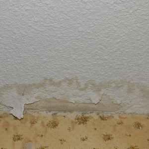 mold damage insurance claims