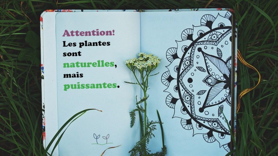 Utilisation sécuritaire des végétaux comme alliés de votre santé