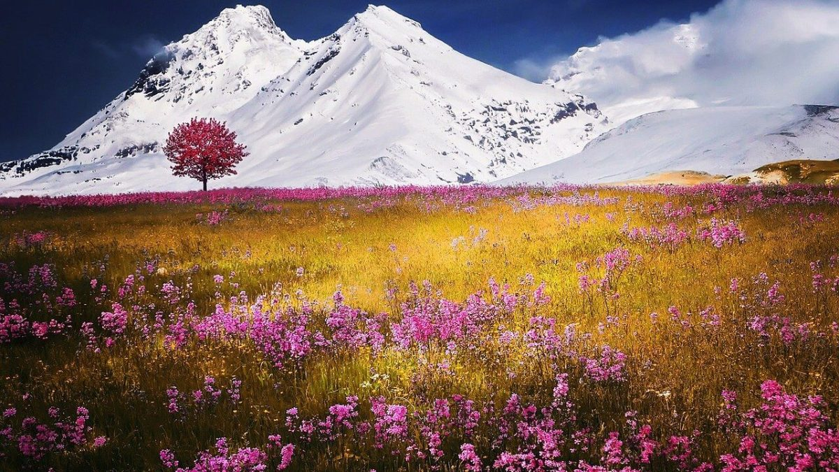 mountains, alps, meadow-757731.jpg