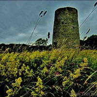 Changing Seasons ~ July's The Time For Lady's Bedstraw Up On Windmill Hill