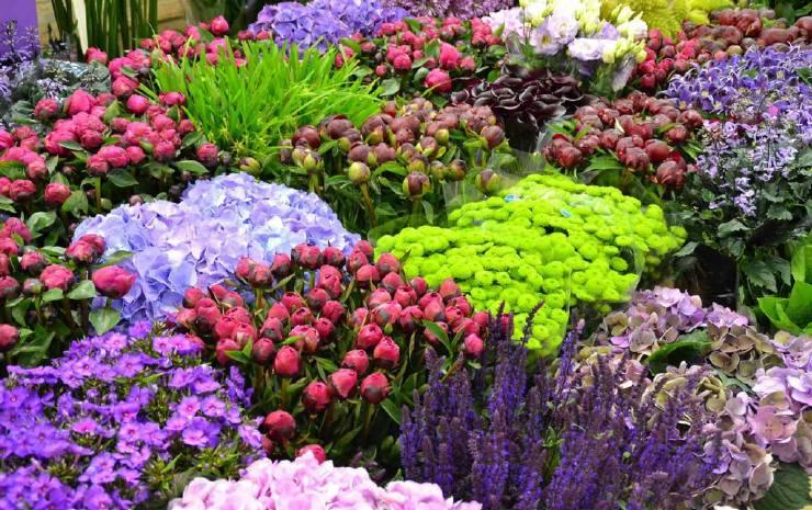 Rungis flowers