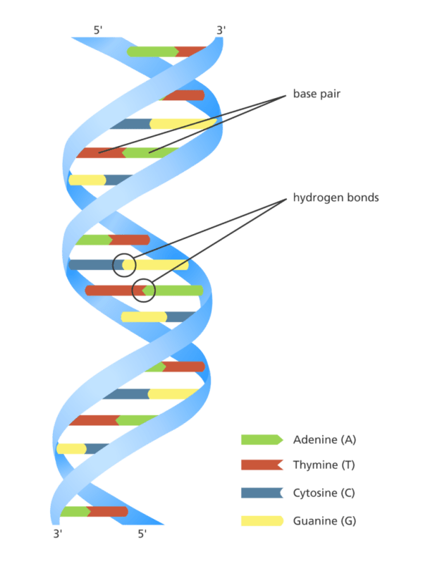 """Can essential oils repair DNA? (the short answer is """"no ..."""