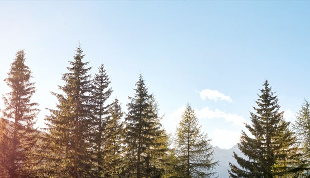 , Forest and paper industry reports on sustainability progress