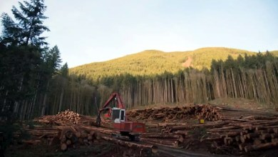 Economic study shows B.C. Forest Industry has deep roots builds strong communities, Economic study shows B.C. Forest Industry has deep roots, builds strong communities