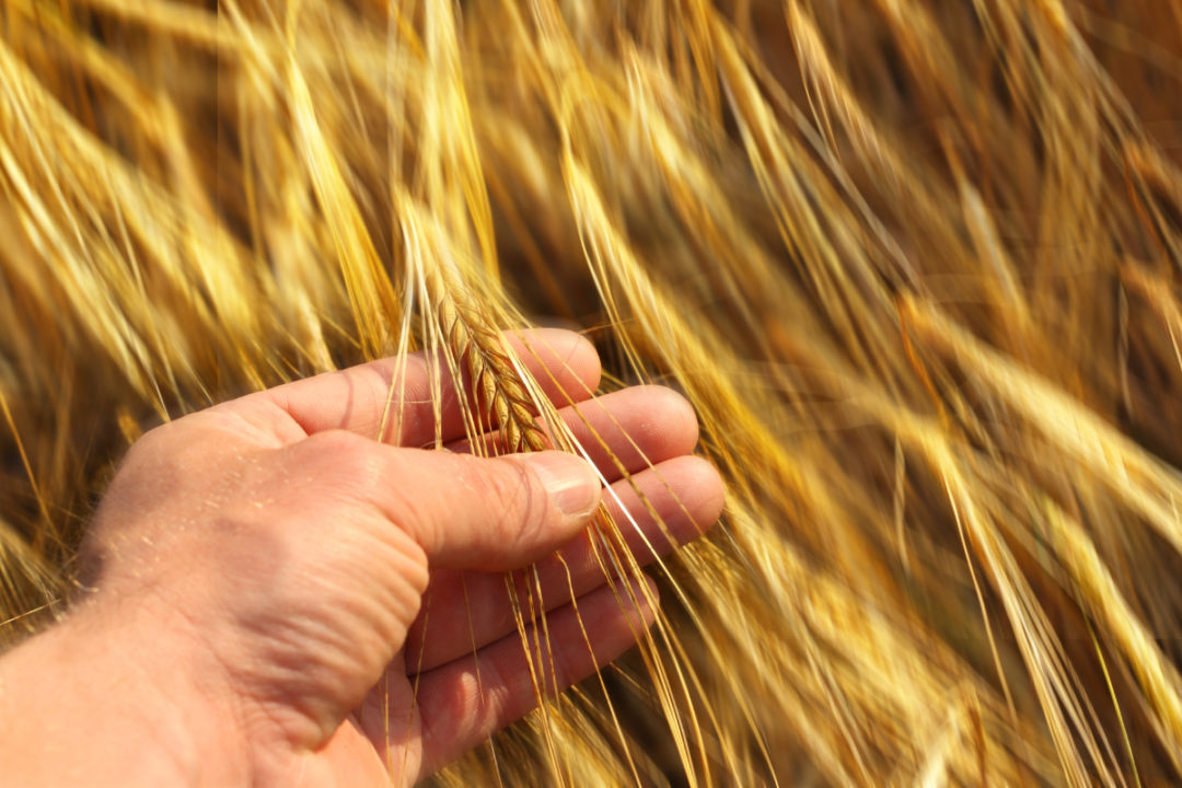 , Red Leaf Pulp Selects Regina as Location for New Wheat Straw Pulp Mill