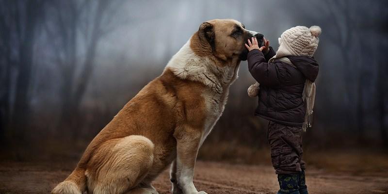 Varázslatos gyerekfotók Oroszországból – Elena Shumilova 5 tanácsa gyerekek fényképezéséhez