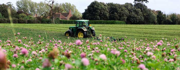 Topping---red-clover