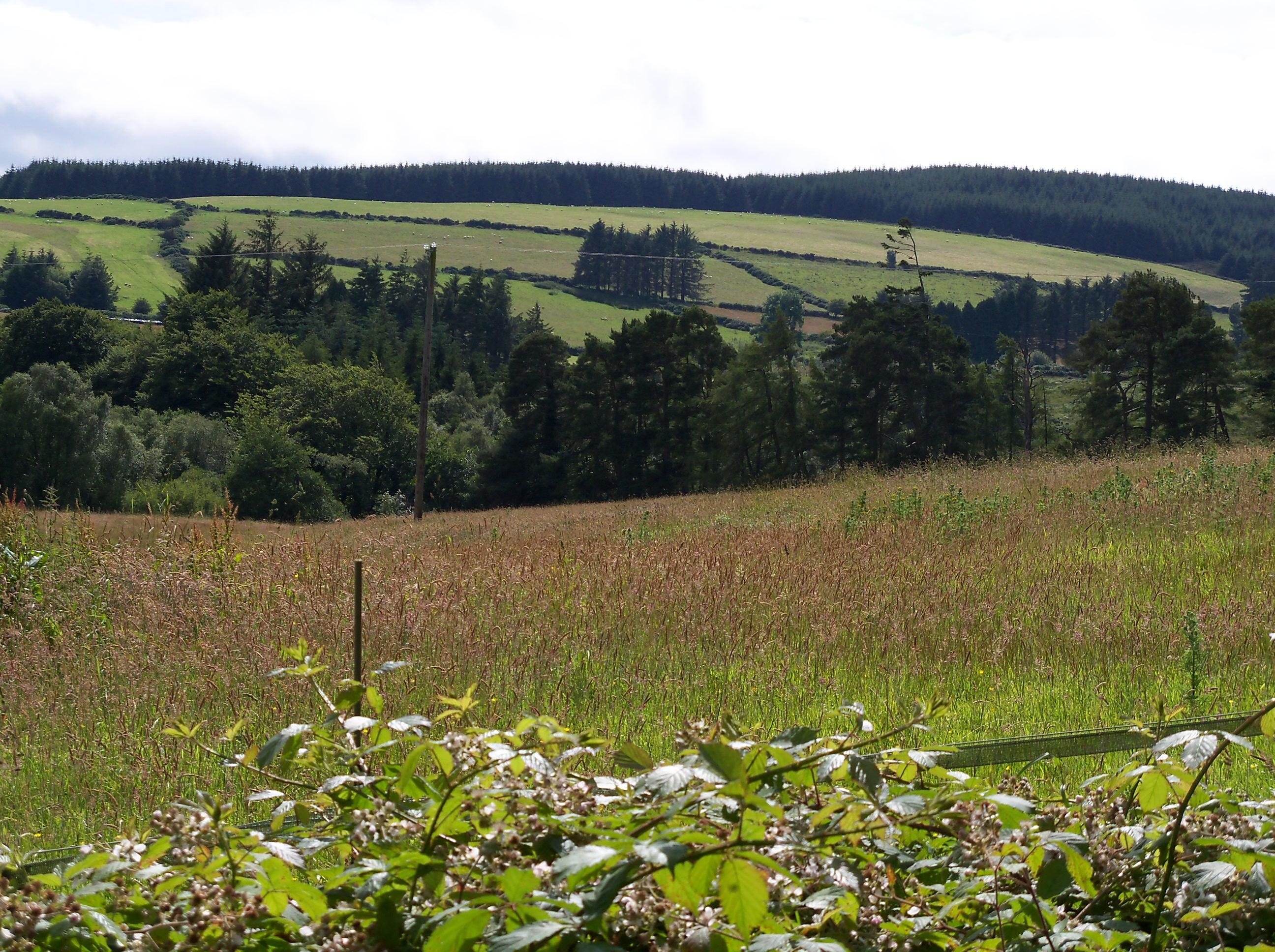 Parque nacional de los montes Wicklow
