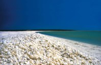 Shell Beach, Shark Bay, Australia. The water near Shell Beach in Australia is so saline that the cockle clam has been able to proliferate unchecked by its natural predators. It is this abundance of molluscs that floods the beaches with their shells.