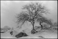 MEXICO. State of Guerrero. 1985. Village of San Augustin de Oapan. A woman in a dust storm, a walking tree.