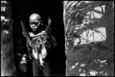 MALI. Village of Senedongo. 1996. A Dogon Christian boy prepares a fowl for cooking. Animal sacrifices are part of Dogon animist rituals.