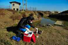 Environmental expert taking samples of dead bird's lungs and liver aside seawater to be sent to Tehran (Capital) for more testing. On the Sixth day of monitoring, the number of dead migratory birds have reached 7,000, the carcasses were mostly from three bird species of Flamingo, coot and Northern shoveler.