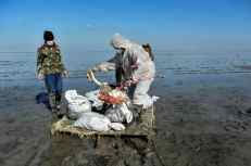 The initial collection is carried out by the Environmental Forces and it executed with bare hands. They are then transported to the landfill by Horses and sleds. The number of dead migratory birds have reached 7,000, the carcasses were mostly from three bird species of Flamingo, coot and Northern shoveler.