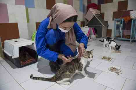 Rasht, Iran – May 2020. Cats suffering from rare diseases are kept and treated here in this room. Ms. Azadeh Mahjoub, 39 years old, examining a dog in her animal's rescue shelter. In 2012, she set up a shelter for injured animals (often dogs and cats) in the suburbs of the city of Rasht (Lakan shahr region) in North part of Iran. She is a graduate of accounting and has been an employee of a public university. Azadeh resigned from her job to protect animal rights and started a shelter by selling her wedding gifts (jewelries) alongside her husband's financial contribution. Currently, 150 dogs and 70 cats are kept in this shelter. The symptoms of these animals include abuse by previous owners, road accidents, digestive and mental health problems. This place is the only shelter in Iran that also keeps dogs with spinal cord injury. In this shelter, there are three female and one male contractor who are covering daily tasks but keeping them around is a hard job due to the hardship of the job and small amount of salary. For such high volume of work, this place needs more than 7 workers at the same time, and due to financial difficulties, they cannot pay their salaries and with only 4 workers, it is very hard to run such place. Iran is an Islamic country and dog is considered as an impure animal. Over time, when hardliners, became aware of the existence of this shelter, Azadeh repeatedly received threatened messages that the site to be set on fire by different individuals. Monthly expenses of this shelter exceed 30 million tomans ($2500) a month, which is usually managed with public donations. Unfortunately, with the outbreak of coronavirus and people's low income, the volume of public donations has greatly decreased, and the institute is struggling with many problems. This has also affected the workers and 2 of them have been replaced. During the year, several restaurants and wedding halls used to permanently support the shelter, giving the