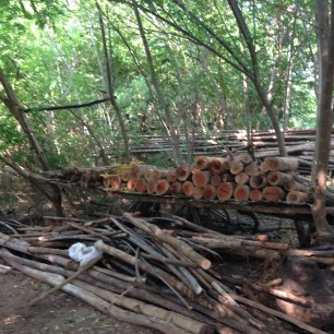 Firewood for cooking