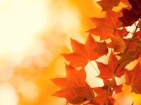a photo of red leaves on a golden background