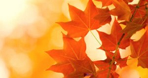 photo of red leaves
