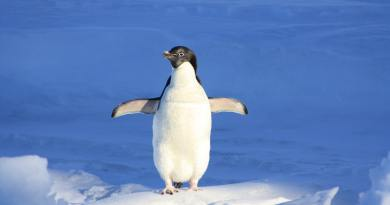 Support the Library with a Penguin Plunge Pledge!