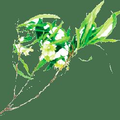 Bois d'Arnette