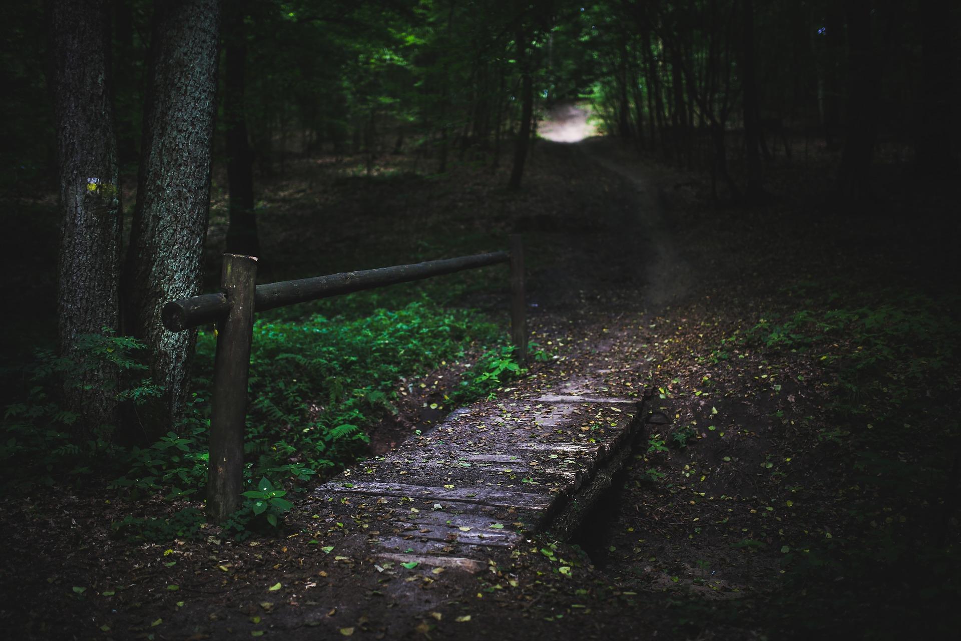 Significato della fiaba La bella addormentata nel bosco
