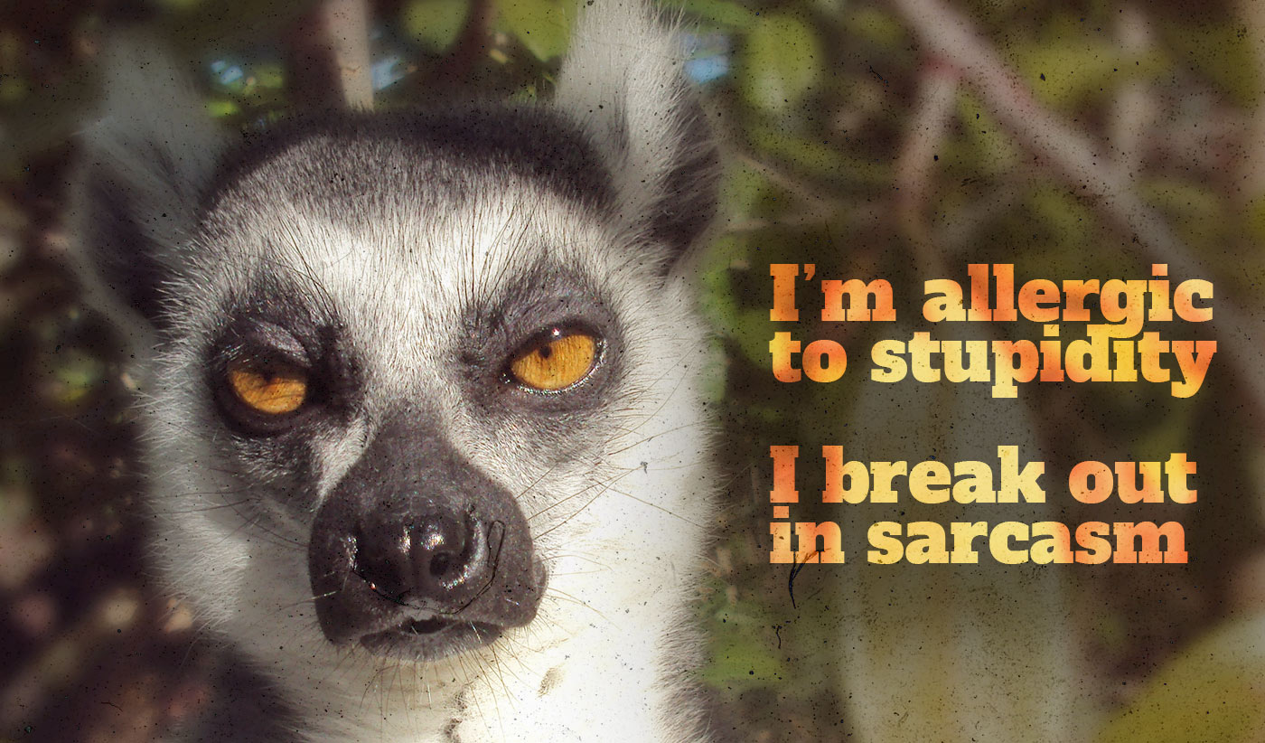 daily inspirational quote image: a meerkat looking straight up with a sarcastic look on its face