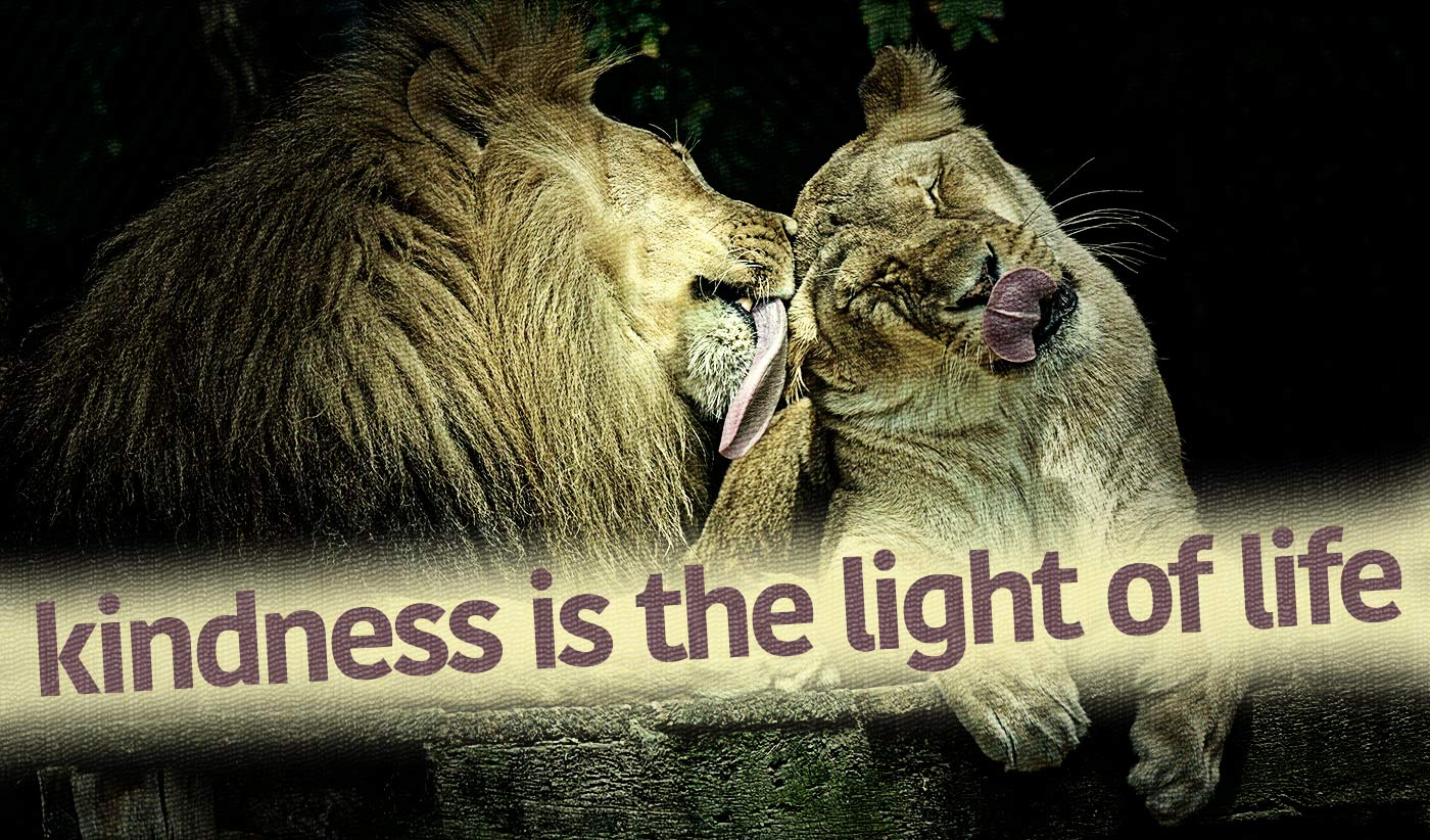 daily inspirational quote image: a lion licking a lioness's head