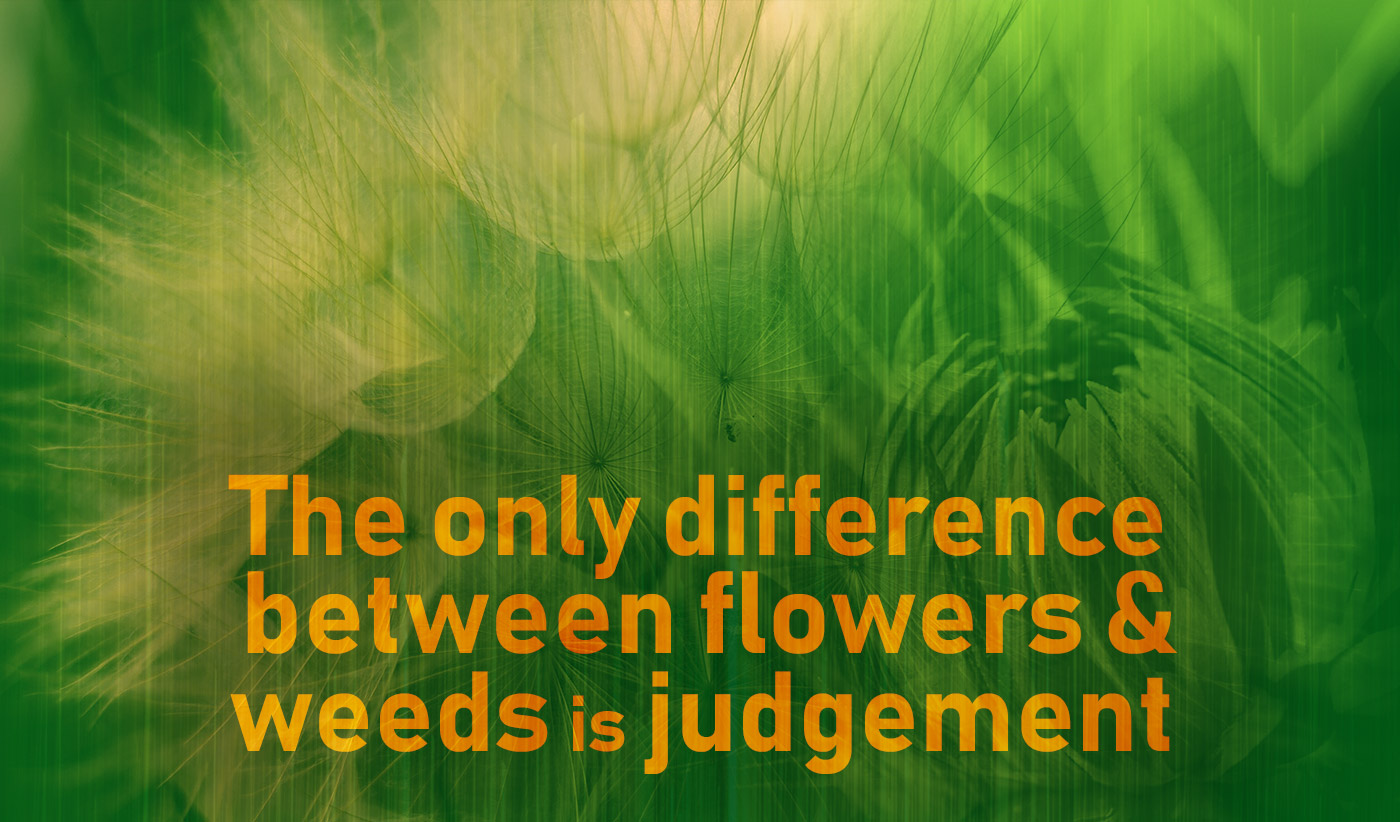 daily inspirational quote image: green and yellow collage of a dandelion and a Chrysanthemum