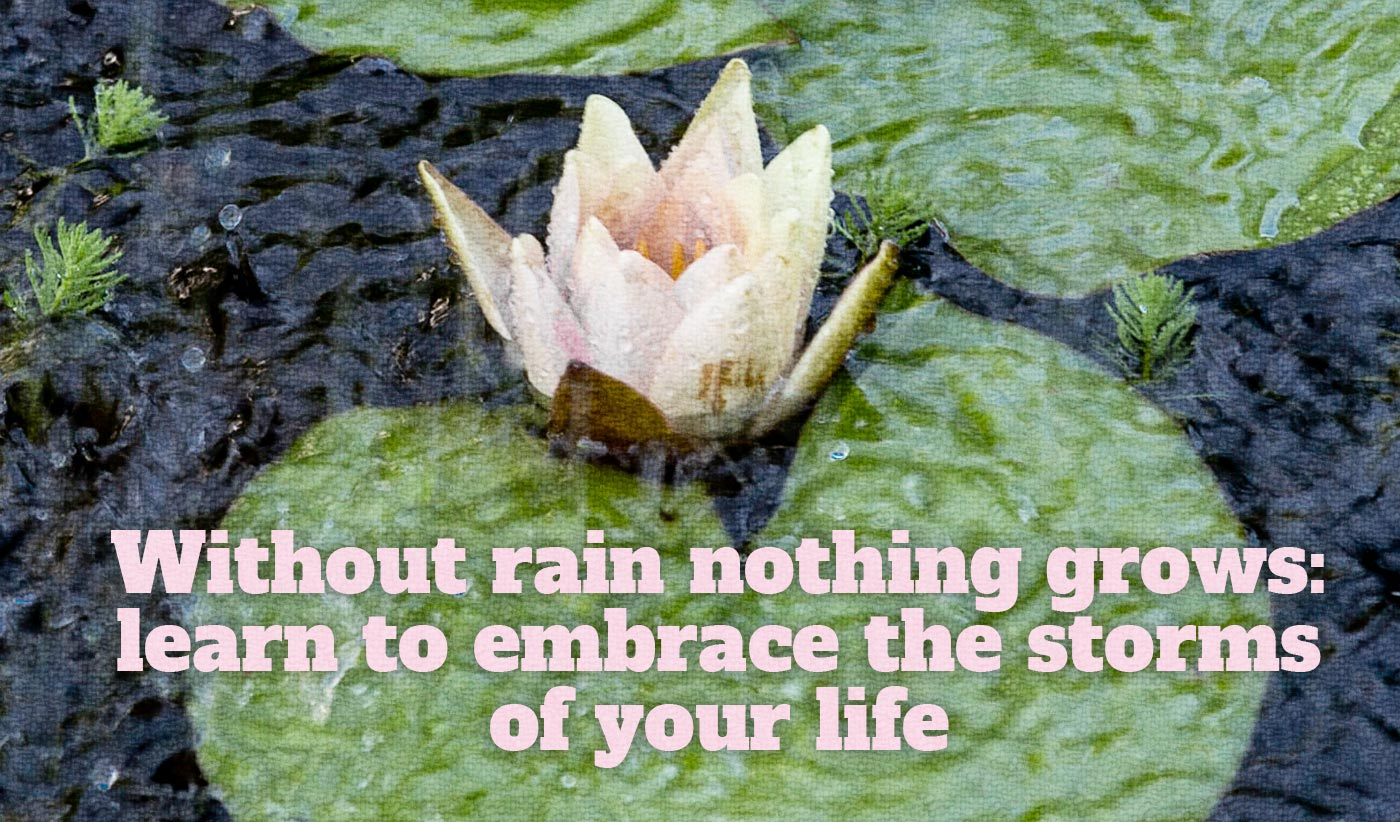 daily inspirational quote image: a waterlily on its leaf during a storm