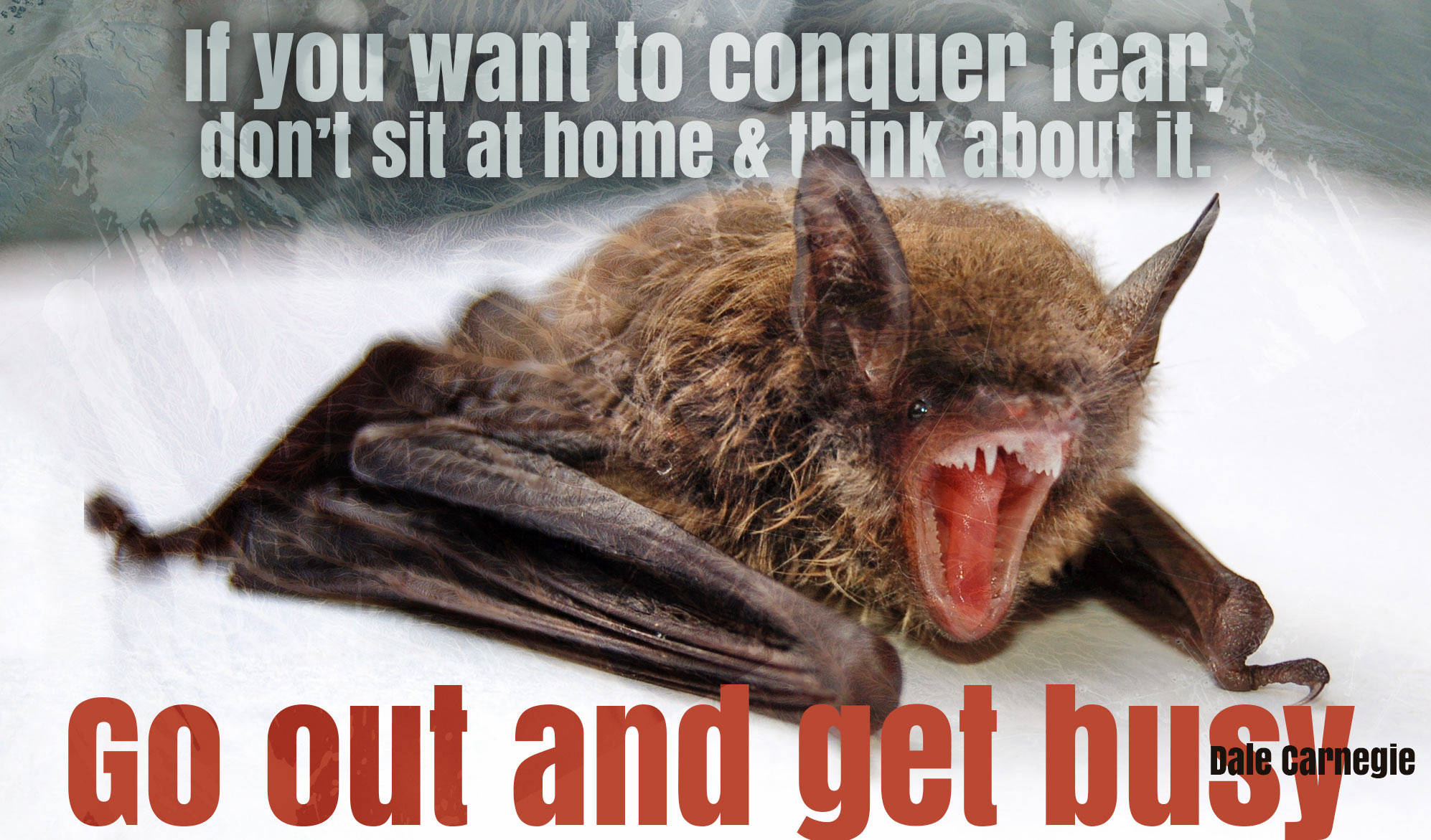 daily inspirational quote image: close up of a screeching bat