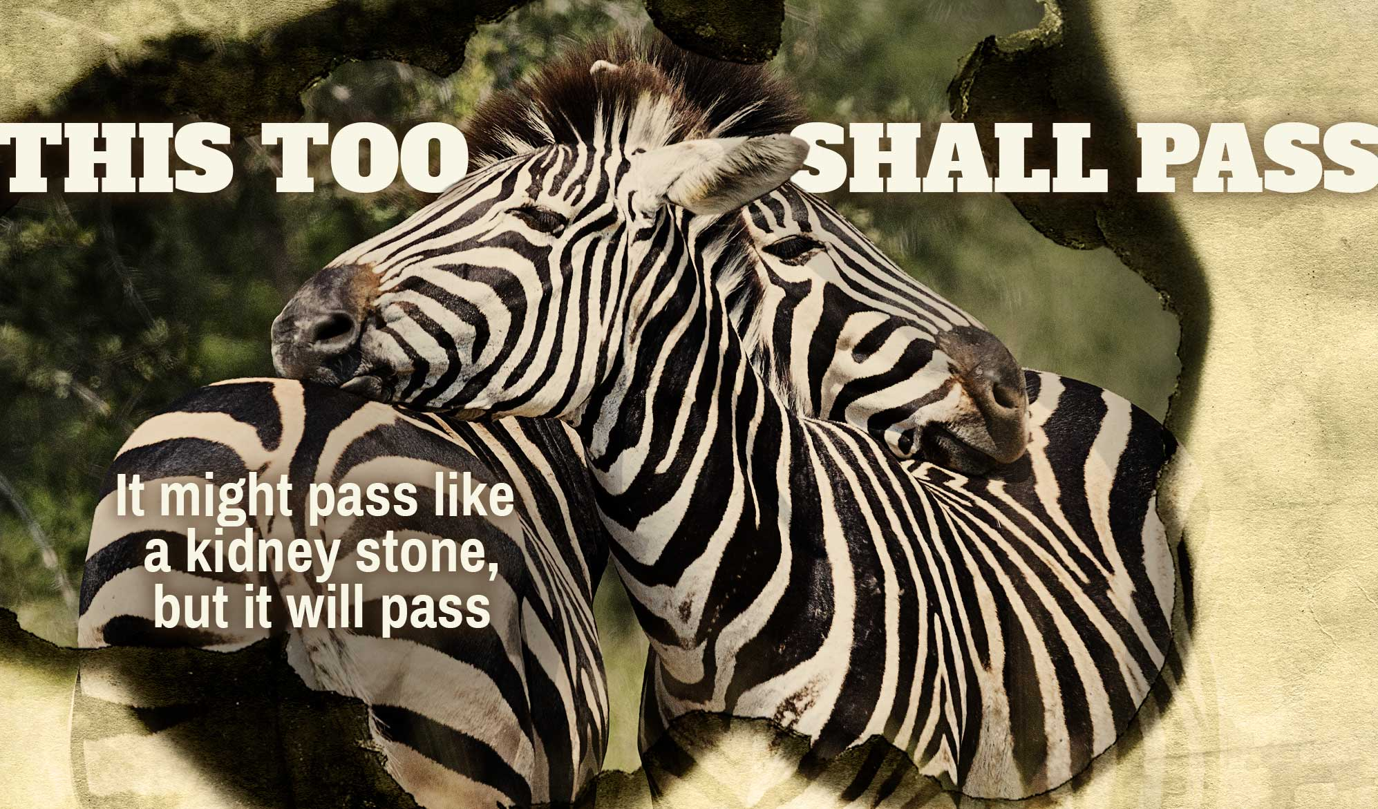 daily inspirational quote image: 2 zebras nuzzling