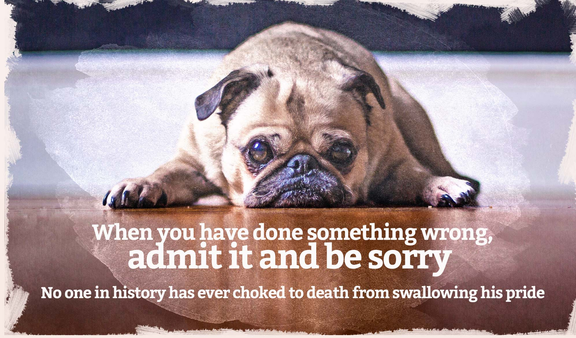 daily inspirational quote image: puppy looking guilty on the floor