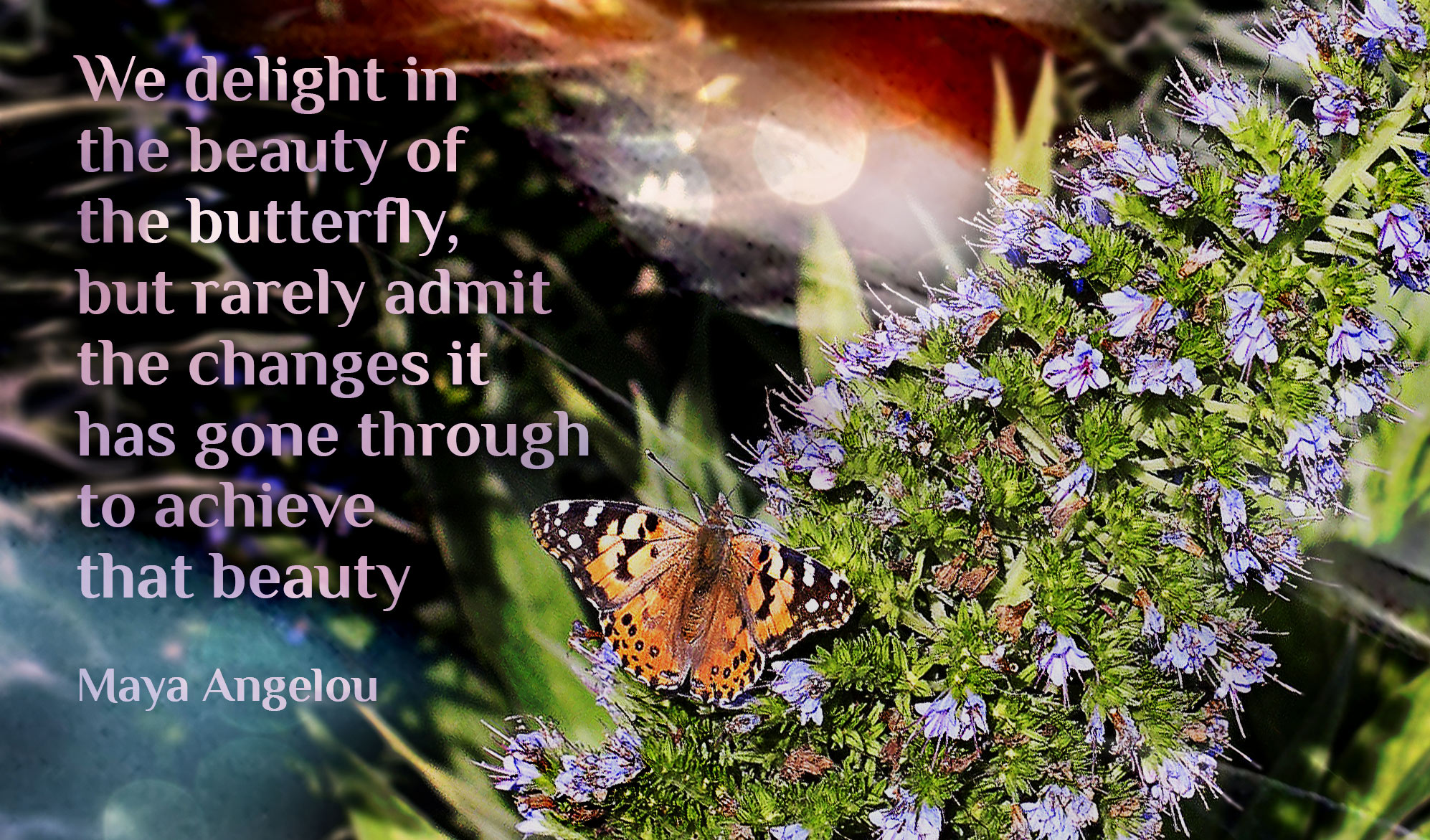 daily inspirational quote image: an orange butterfly on a Pride Of Madeira plant in bloom