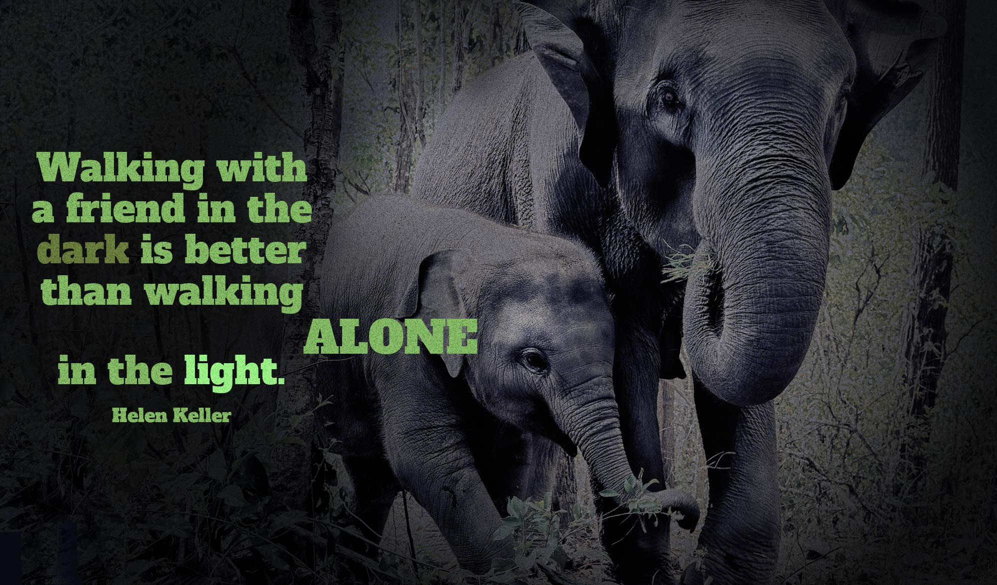 daily inspirational quote image: a mom and a baby elephant walking in a dark forest